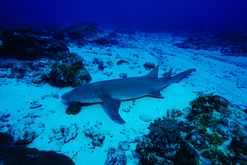 Nurse Shark - take a bite out of your research!